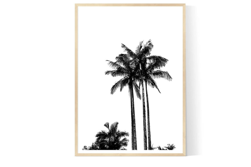 GC PALM| Limited Edition Photographic Art