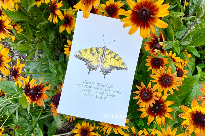 Watercolor butterfly art in yellow flowers