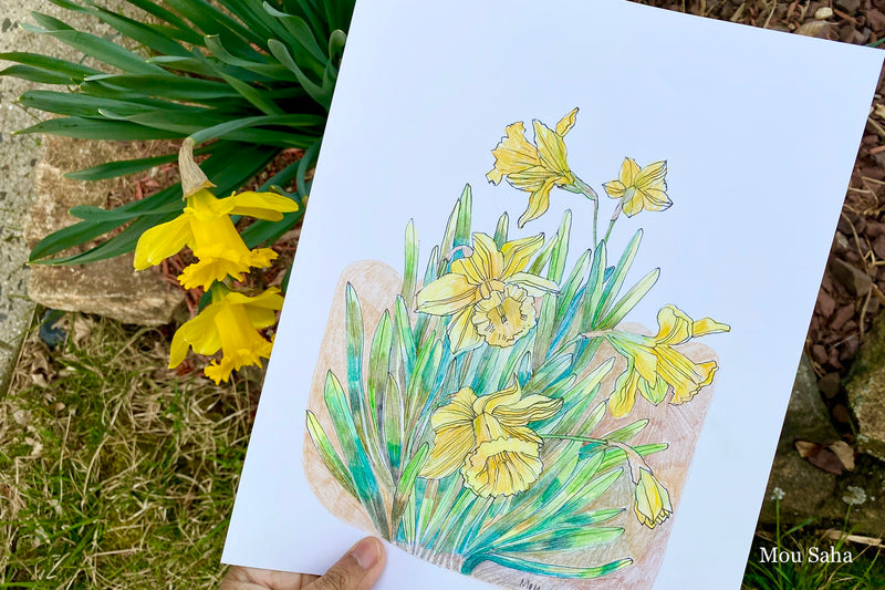 Daffodil Goldfaber Sketch