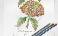 Watercolor Hydrangea Lesson Plan