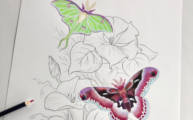 Moth sketch with Golfaber Color Pencils