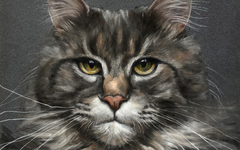 Pet Portrait Pitt Pastel Tutorial - Maine Coon Cat