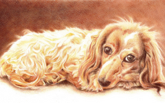 Pet Portrait Tutorial with Goldfaber Color Pencils
