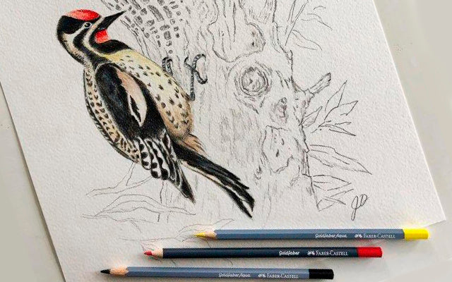 Inspired by Nature: Goldfaber Wood Pecker