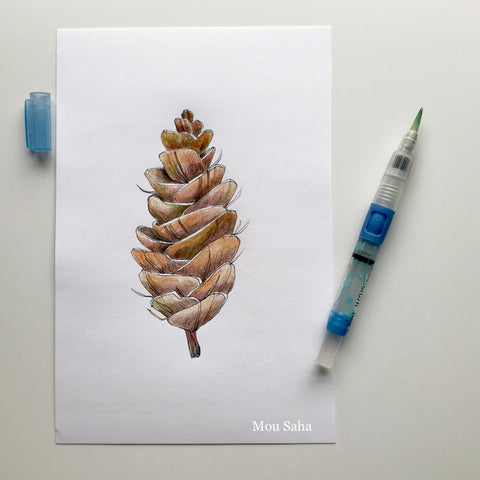 Pinecone Sketch with Waterbrush