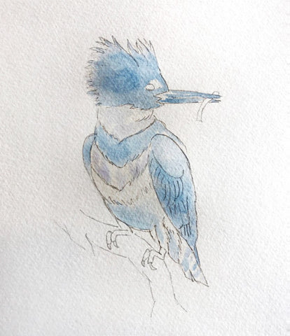 Sketch of bird