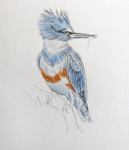 Bird sketch with watercolor
