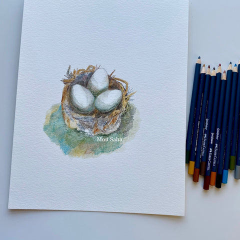 Birds nest sketch with Goldfaber Color Pencils