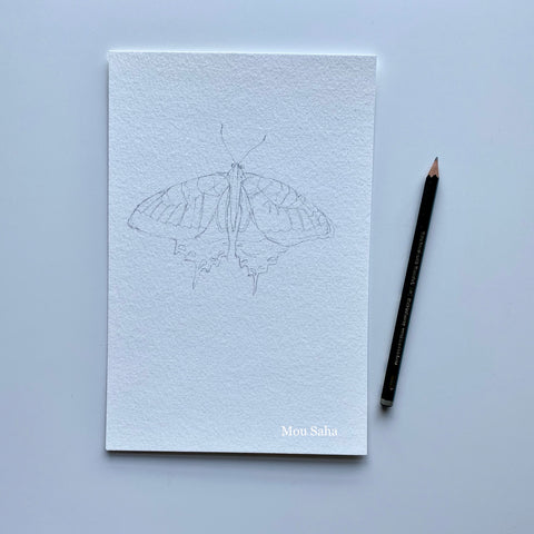Graphite sketch of butterfly with Castell 9000 Pencil