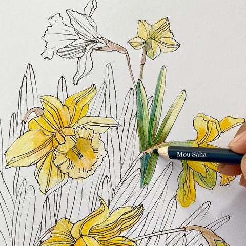 Yellow and green daffodil sketch with Goldfaber Color Pencil