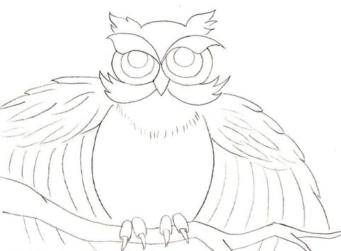 Outline of owl