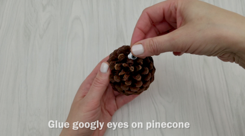 Googly Eye on Pinecone