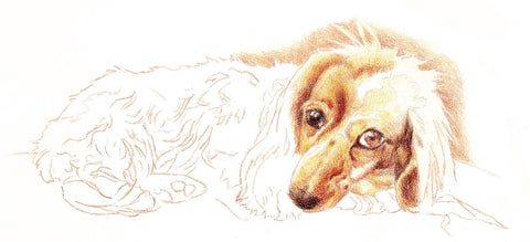 Dog outline with colored in face