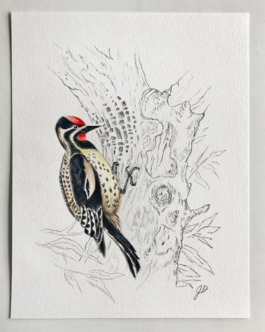 Woodpecker Sketch Finished
