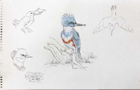 Multiple bird sketches
