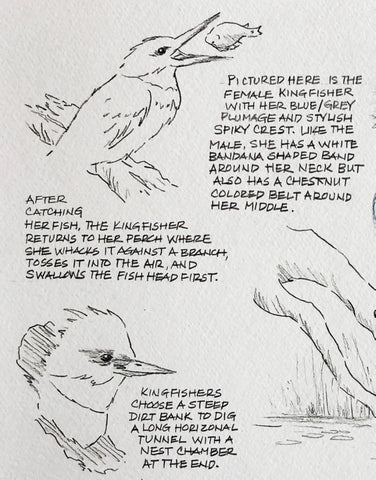 Bird sketches and words