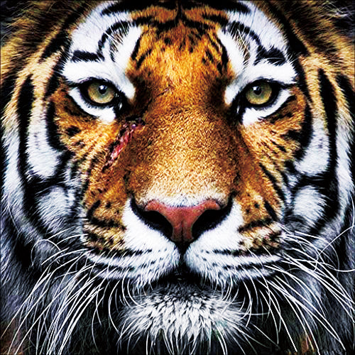 Tigers Head-DIY Diamond Painting