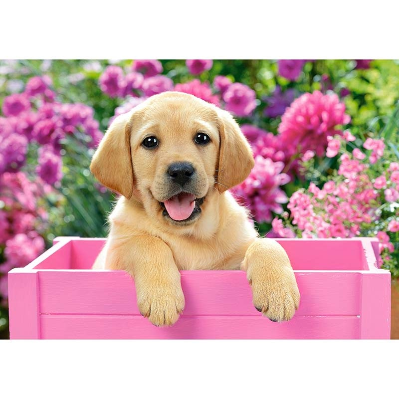 Puppy in the Box-5D DIY Diamond Painting , Diamond Painting kit