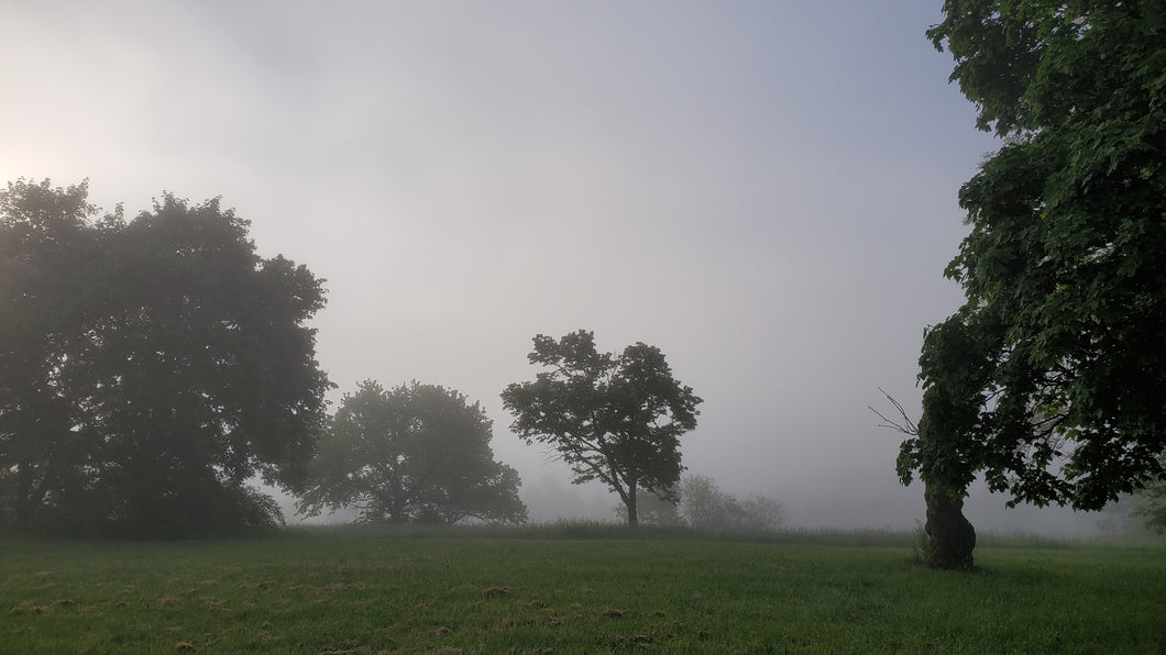 Morning tree and fog in the distance