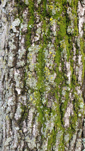 Overlay Texture Tree Bark and Green Moss