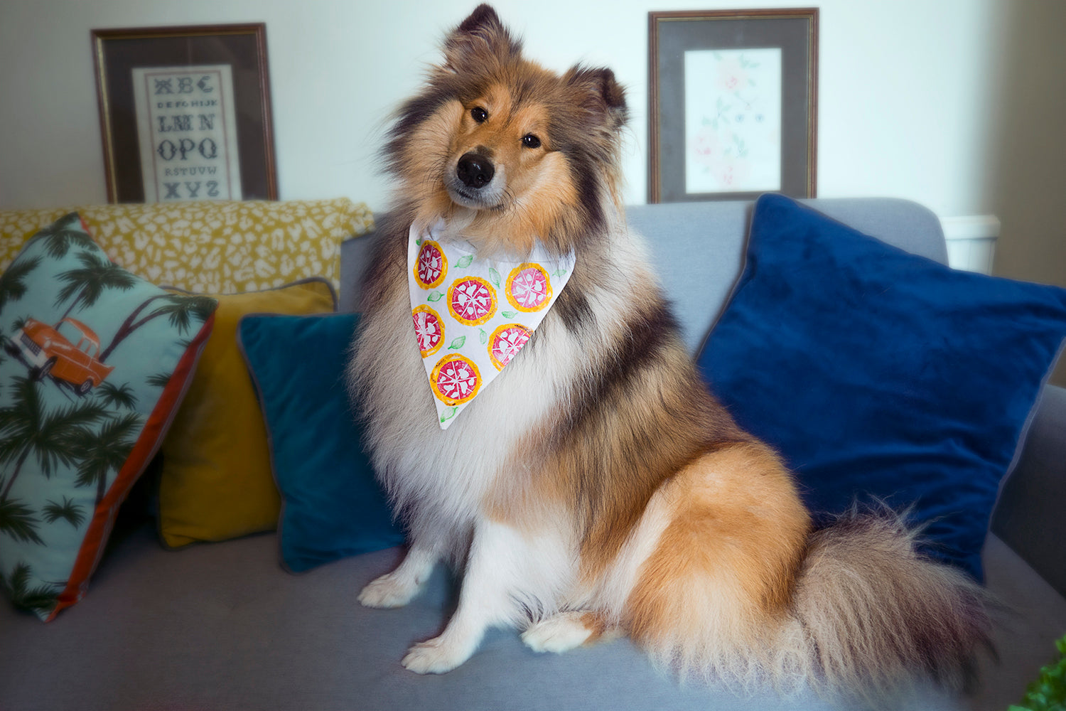 collie dog on sofa with pizza outfit bandana