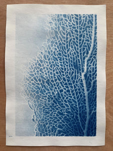 "Photographie cyanotype ""Gorgone"" A4"