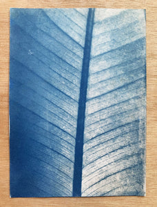 "Photographie cyanotype ""Feuille"" A5"