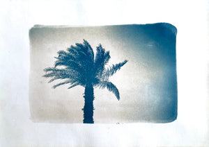 """Grand palmier d'Egypte"" photographie Cyanotype format A4"