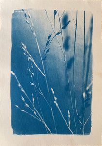 "Photographie cyanotype ""GRAMINÉES II"" format A4"