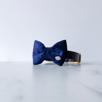 Bobby Blue Velvet Dog Bow Tie By The Distinguished Dog Company
