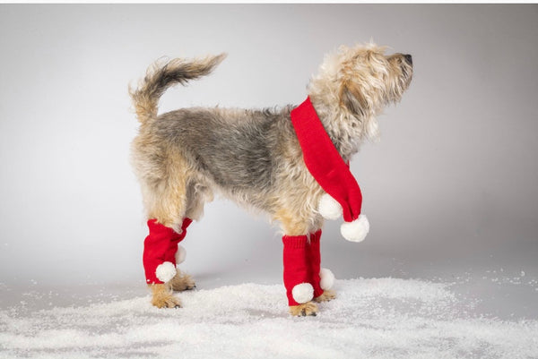 Knitted Red Santa Scarf & Leg Warmers By House Of Paws