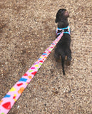 Jelly Bears Step In Dog Harness By Fuzzyard