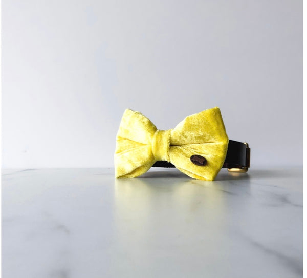 Hello Yellow Velvet Dog Bow Tie By The Distinguished Dog Company