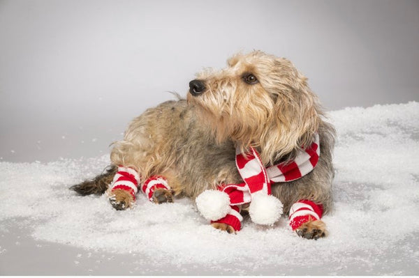 Knitted Candy Cane Stripe Scarf & Leg Warmers By House Of Paws