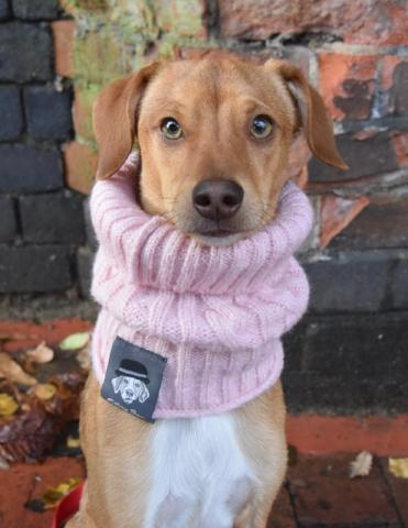 Blush Pink Dog Snood By Ellery Bow