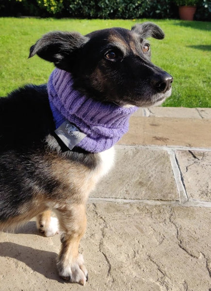 Violet Purple Dog Snood By Ellery Bow
