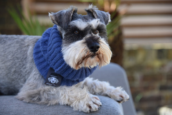 Denim Blue Dog Snood By Ellery Bow