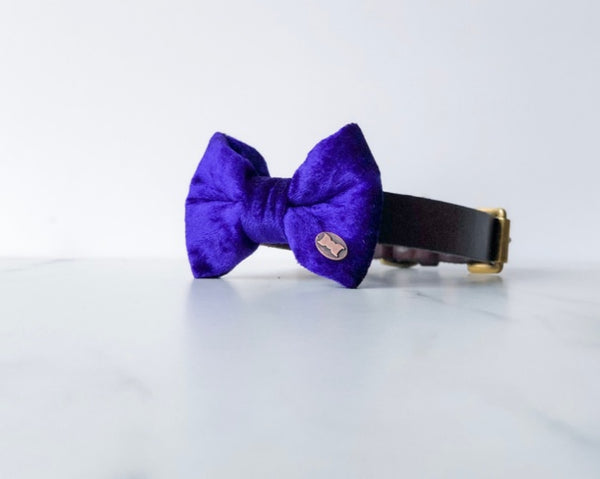 Purple Pomp Velvet Dog Bow Tie By The Distinguished Dog Company