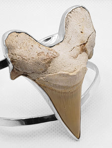 """Shark Attack,"" Megalodon Shark Tooth Bracelet"