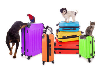 Traveling Abroad with Your Pet