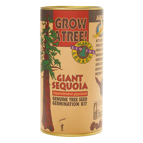 California Redwood | Giant Sequoia | Seed Grow Kit 5440