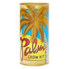 Palm Tree | Seed Grow Kit 5470