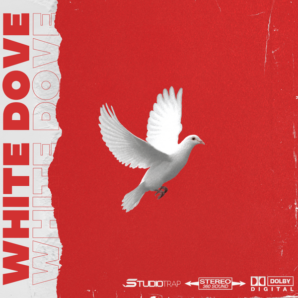 WHITE DOVE - studiotrapsounds