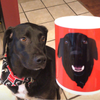 Custom Pet Print Coffee Mug Red