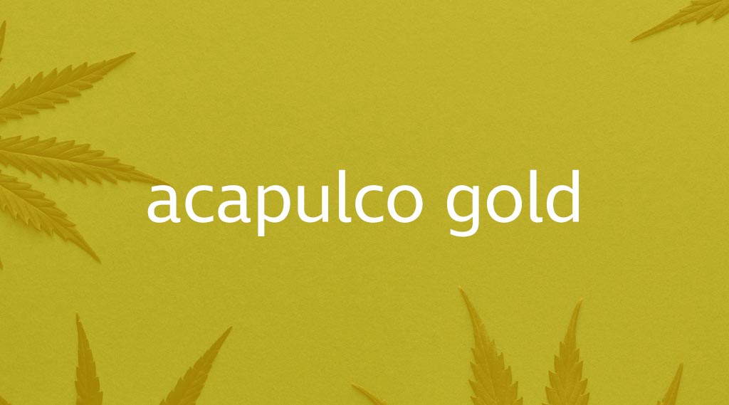 Acapulco Gold Strain Review