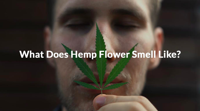 What Does Hemp Flower Smell Like?