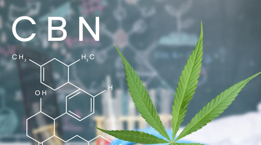 CBN (Cannabinol): Why This Awesome Hemp Cannabinoid Is Getting All Kinds of Attention
