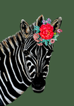 Zebra On Colour