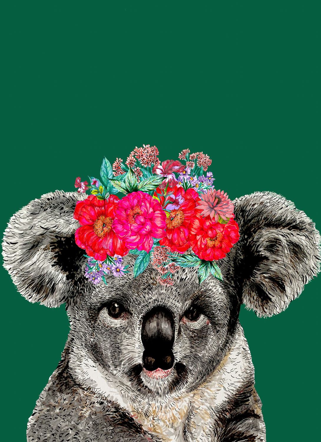 Koala On Colour Giclée Print
