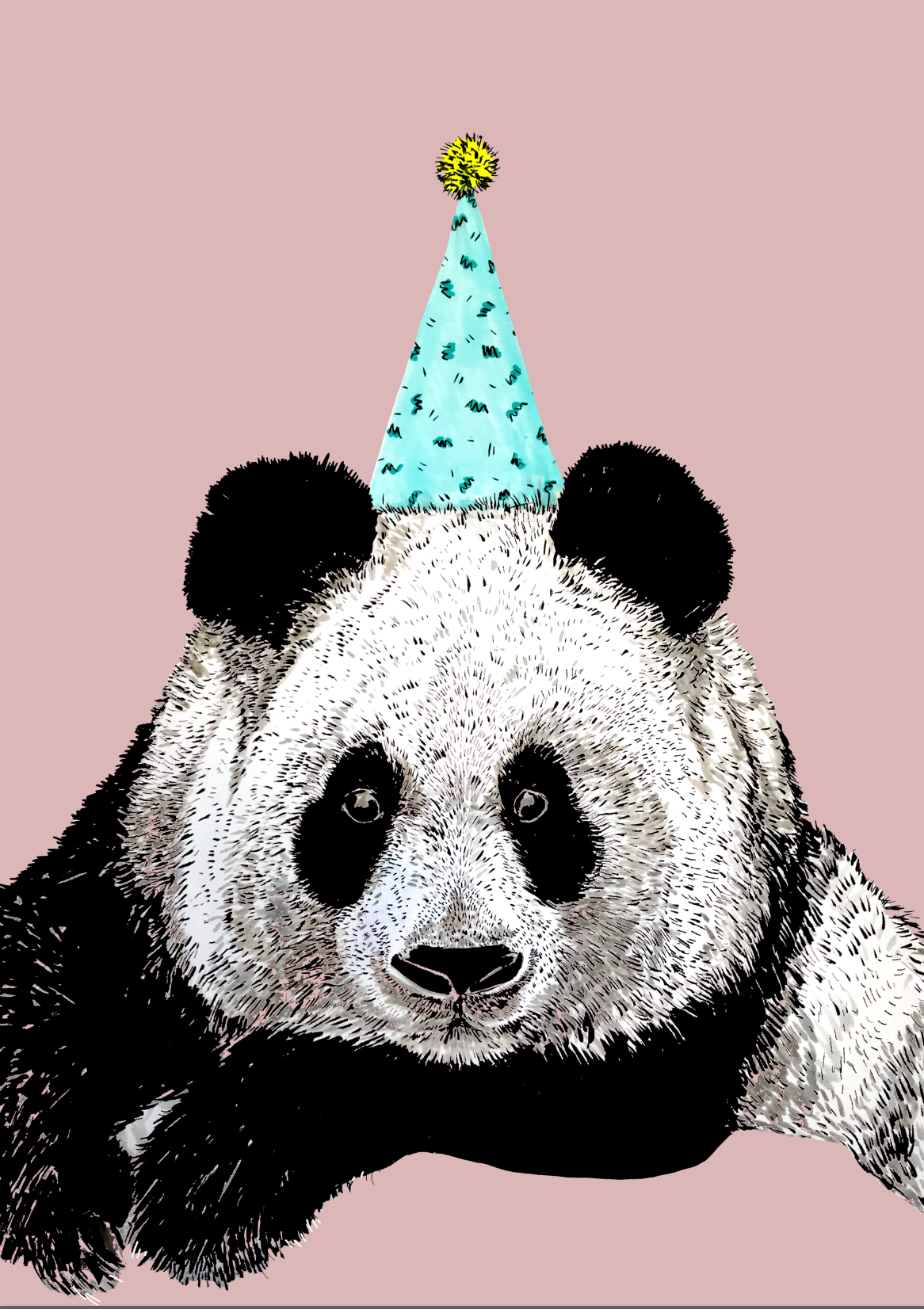 Panda On Colour
